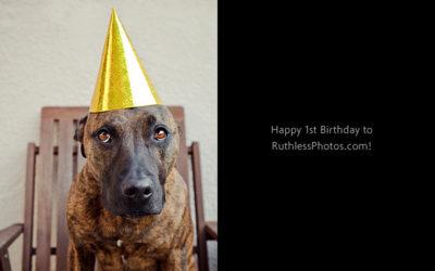 Happy Birthday to me!   Sydney Pet Photographer