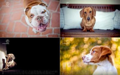 Happy New Year!   Sydney Dog Photographer