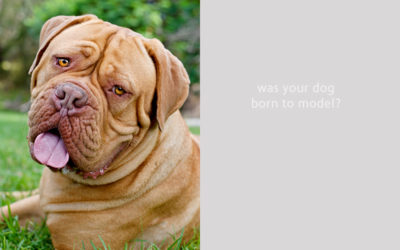 Call for models > Syd | Commercial dog photographer