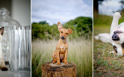 Limited Edition | Sydney Pet Photographer