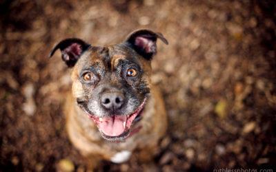 Betty and Uma | Sydney Pet Photographer