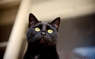 Sid and Vana | Sydney Cat Photographer