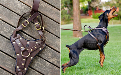 Ruthless Leather update #15 | strong leather dog collars