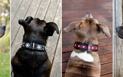Giving away + giving back | leather dog collars