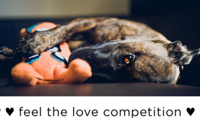 Feel the love competition | Sydney Dog Photographer