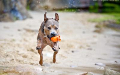 Beach baby Bruno | Sydney Dog Photographer
