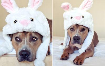 Happy Easter! | Sydney Dog Photographer