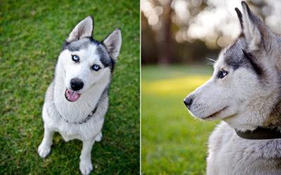 Crystal and Diesel | Sydney Dog Photographer