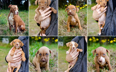 Puppieeeeeeees – Part 2 | Sydney Dog Photographer