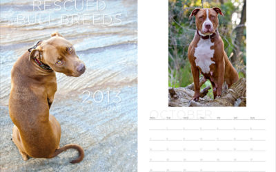 2013 fundraiser calendars | Sydney Dog Photographer