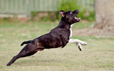 Vulcan | Sydney Dog Photographer