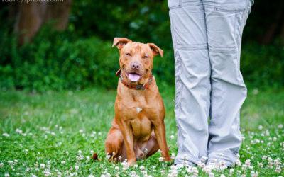 Anchor and Caprica   Sydney Dog Photographer