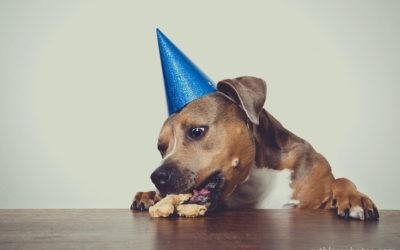 Happy Day! | Sydney Dog Photographer