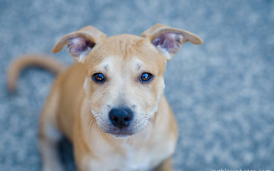 Very Fetching Dogs pt2   sydney dog photographer
