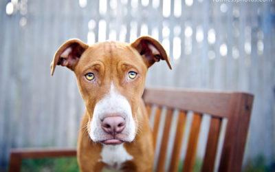 Gambit | Sydney Dog Photographer