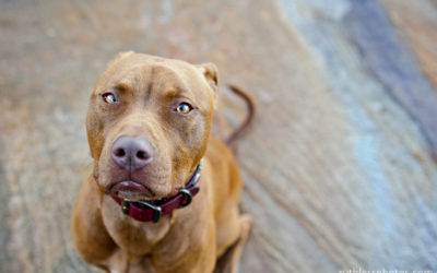 Cocoa the Dog   Sydney Dog Photographer