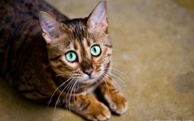 Cara Mia | Sydney Pet Photographer