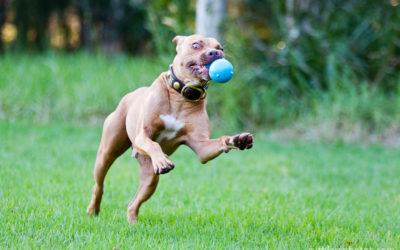 Jackson   Sydney Dog Photographer