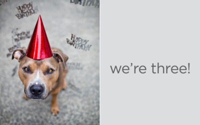 We're three! | Strong leather dog collars
