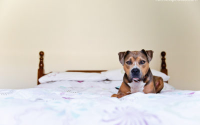 It's all about Bruno pt5 | Sydney dog photographer