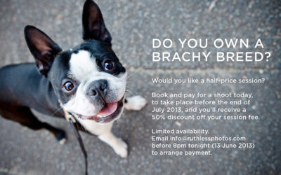 Special offer | Sydney Dog Photographer