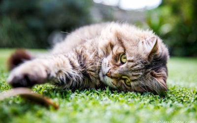 Mitz and Sammy | Sydney Pet Photographer