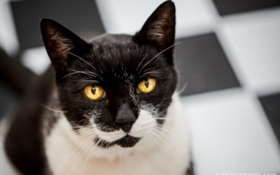 Sampson the Cat | Sydney Cat Photographer