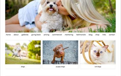 my shiny new website | sydney pet photographer