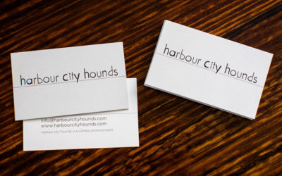 harbour city hounds | sydney dog photographer
