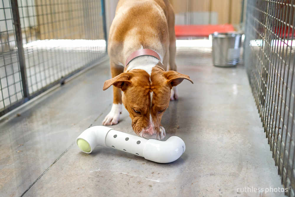 dog shelter pound enrichment program