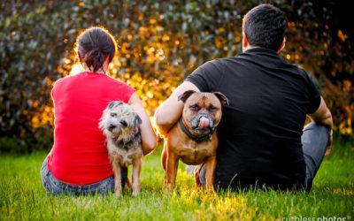 Fonzie and Luna | Sydney Dog Photographer
