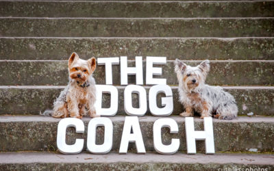 The Dog Coach | Sydney Dog Photographer