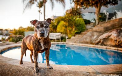 Karma | Sydney Dog Photographer