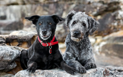Sooty and Lucy | Sydney Pet Photographer