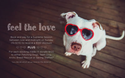 feel the love promotion | sydney dog photographer