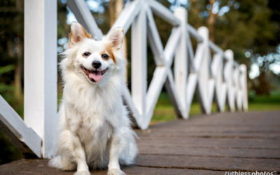 Pepe | Sydney Dog Photographer