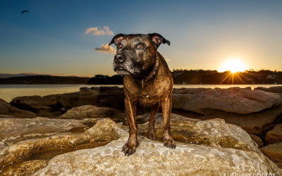 The fallen muse | Sydney Dog Photographer