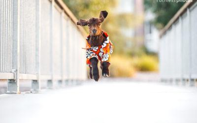 Cowboy Bebop | Sydney Pet Photographer