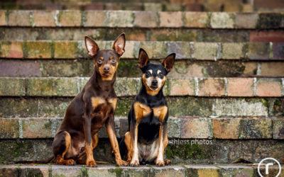 Mint & Jazz | Sydney Dog Photographer