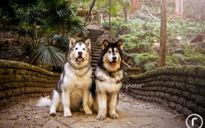 Kodiak and Kela | Sydney Dog Photography