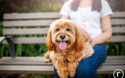 Bailey | Sydney Dog Photographer