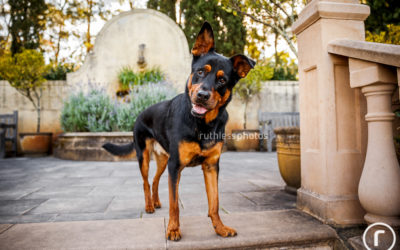 Axel | Sydney Dog Photographer