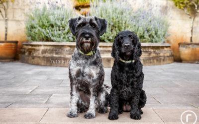 Jack and Ruby | Sydney Pet Photography