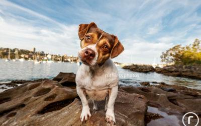 Lola the beach babe | Sydney Dog Photographer