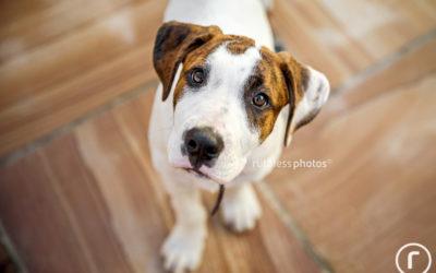 r u ok? | Sydney Dog Photographer