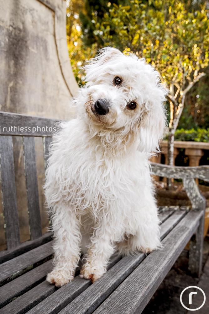 Allie, Floyd and Archie | Sydney Pet Photos - ruthless photos
