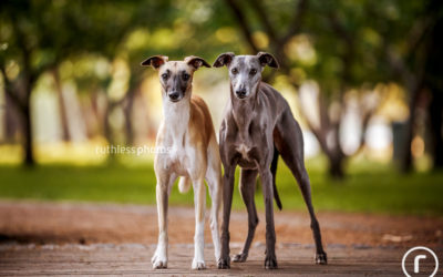 Mouse and Possum | Canberra Dog Photographer