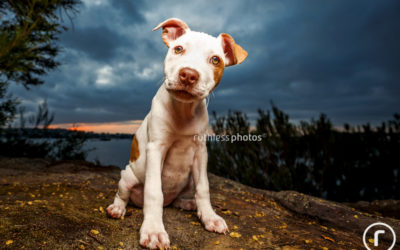 Adopt me 11.15 | Sydney Pet Photography