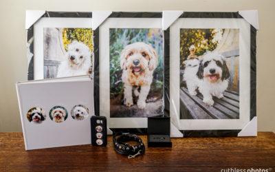 Allie, Floyd and Archie | Sydney Pet Photos