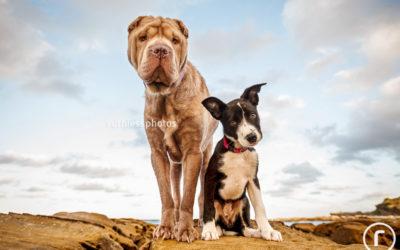 Peityn and Zari | Sydney Dog Photographer